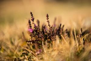 Naturfreunde bekommen seltene Flora und Fauna zu sehen